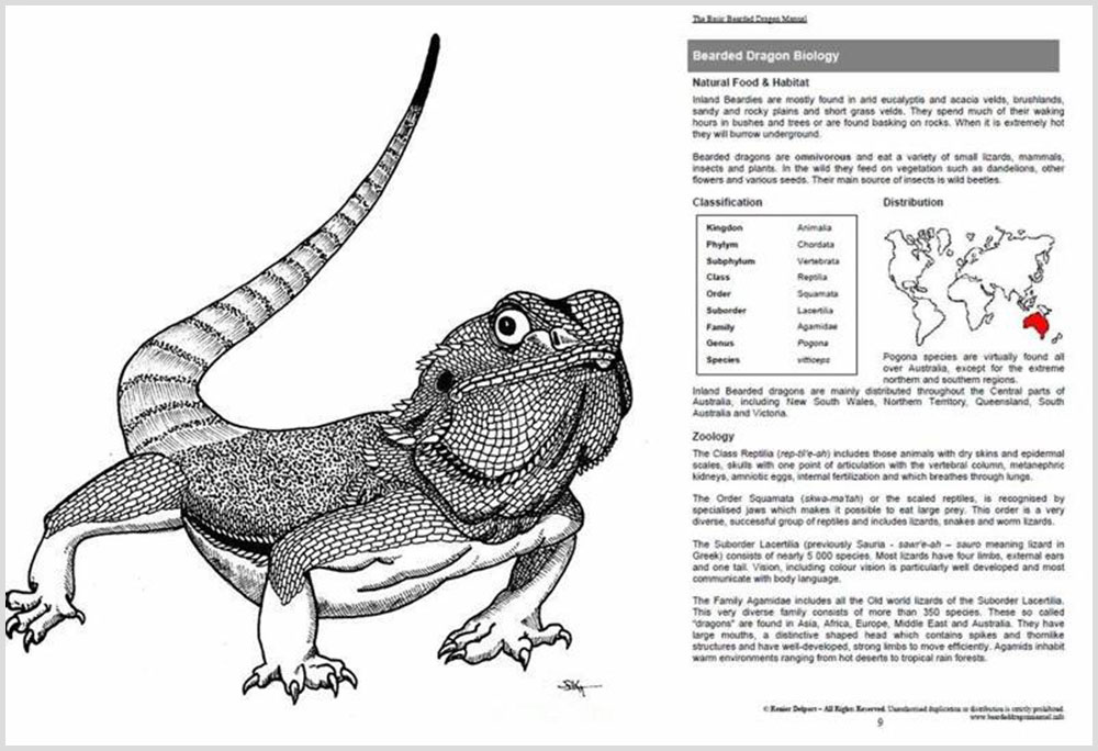 Bearded Dragon Secret Manual Review